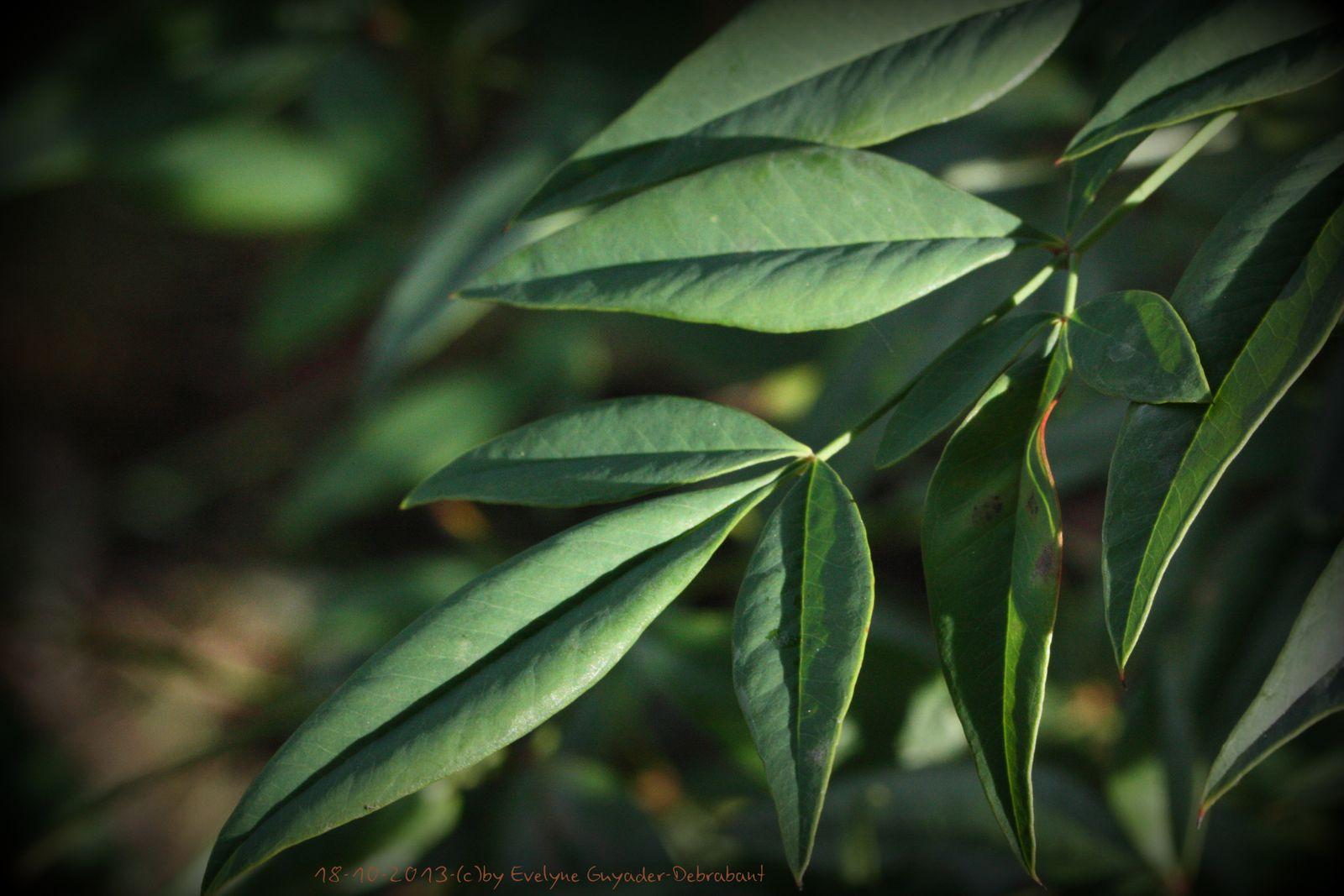 Incontournables... Les feuilles d'Automne