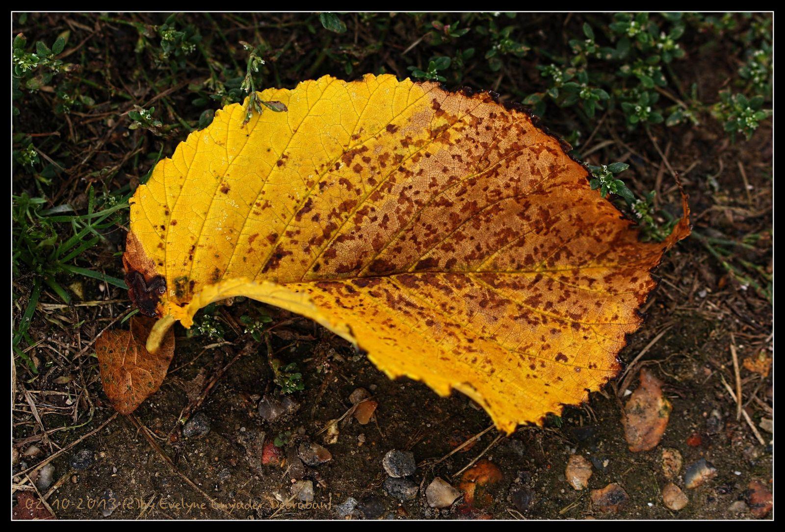 Octobre en jaune et rouge..