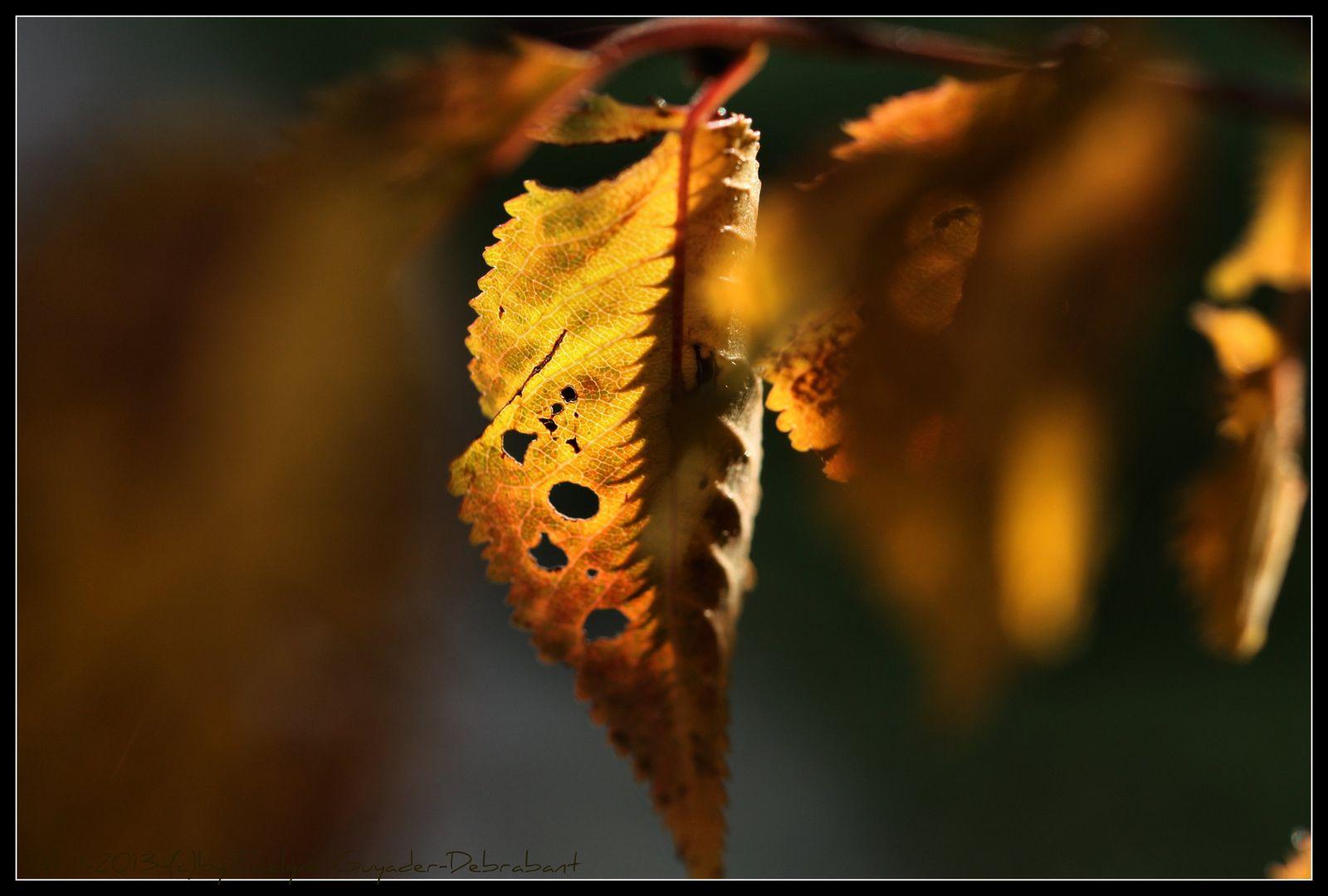C'est l'automne, encore pour un bon mois..