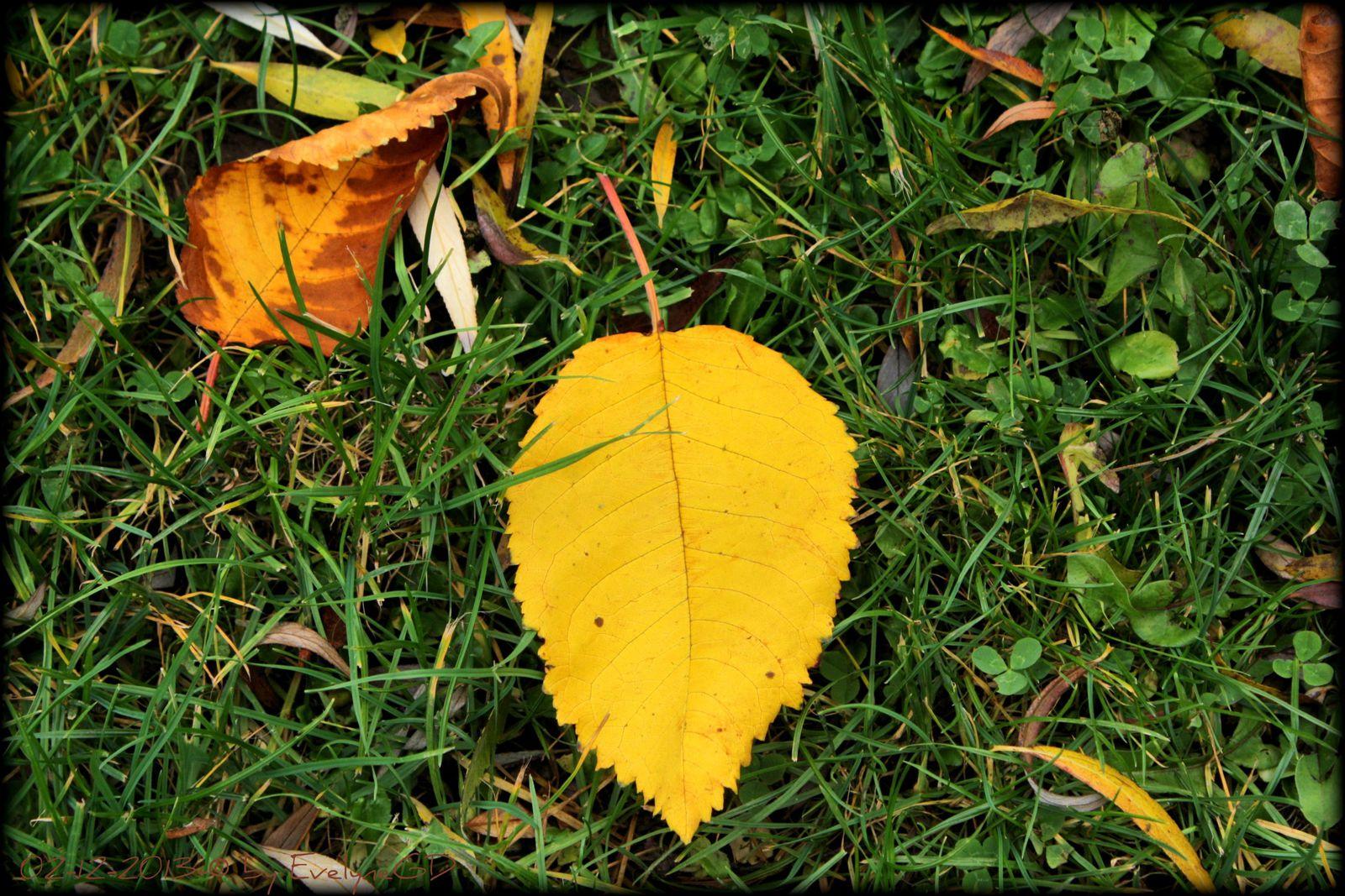 Les feuilles mortes..