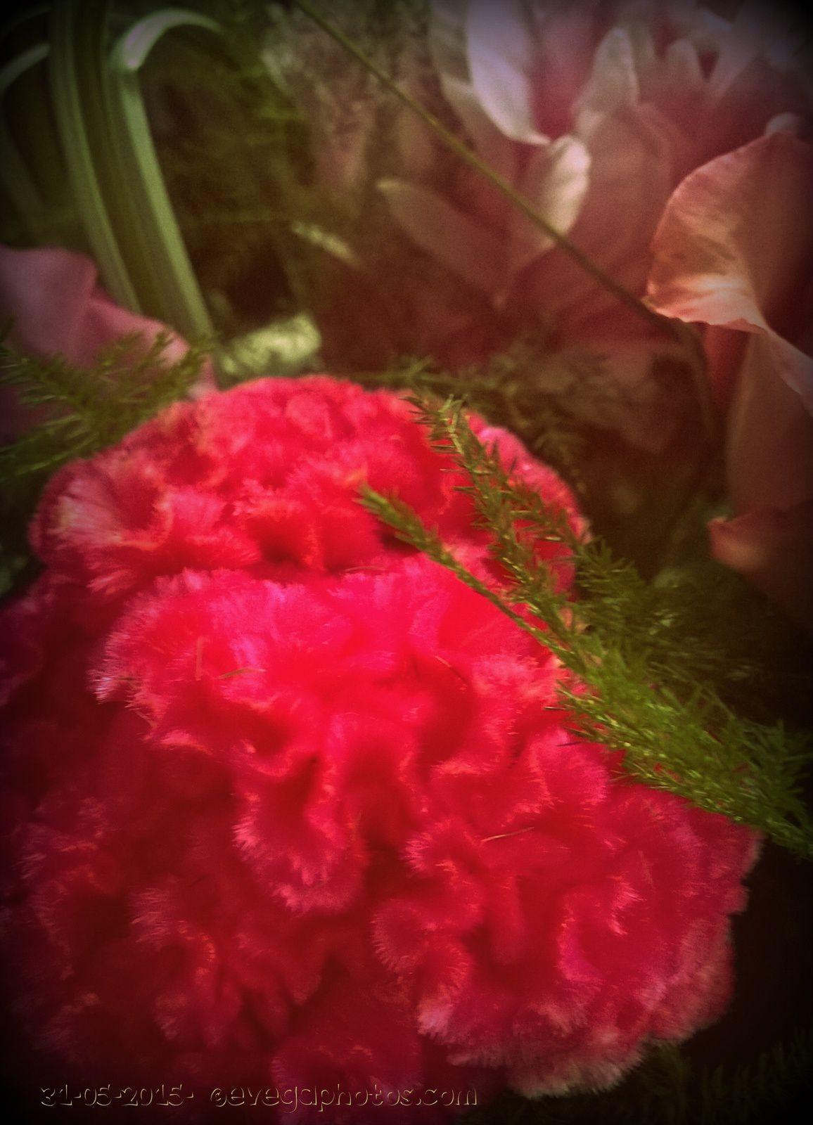 Mon joli bouquet rose...