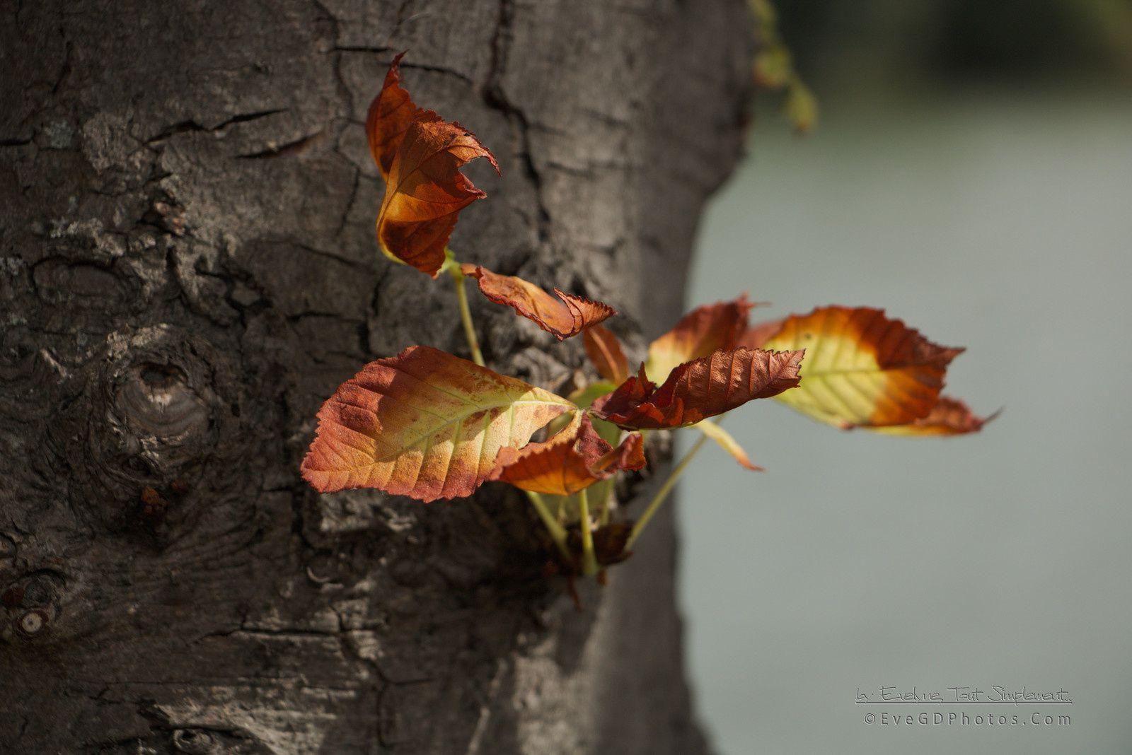 Les prémices de l'automne..