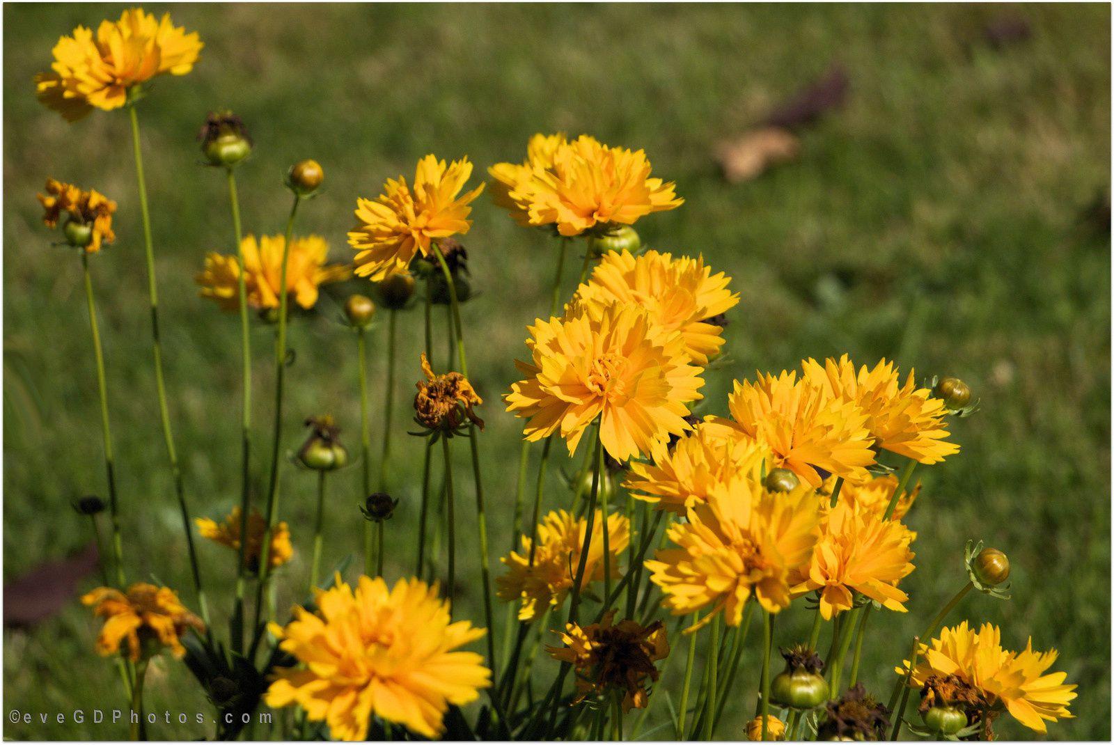 Quelques fleurs en automne..