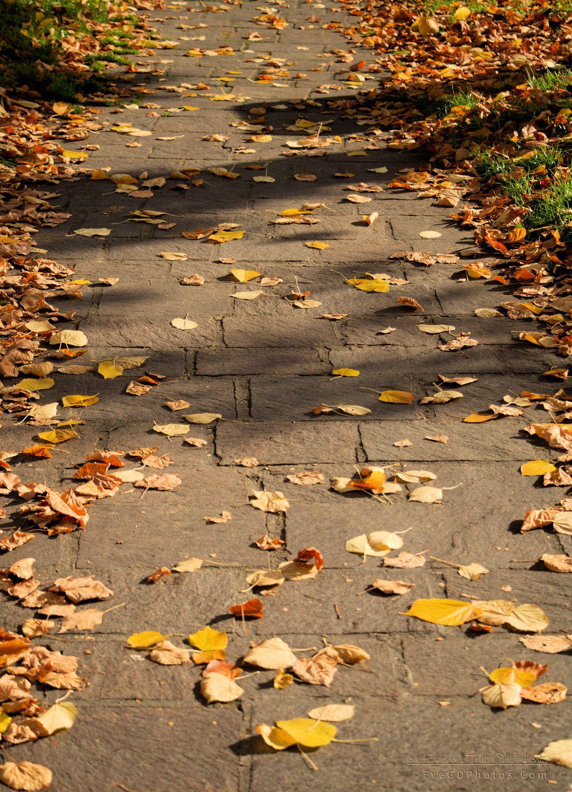 Une feuille, des feuilles