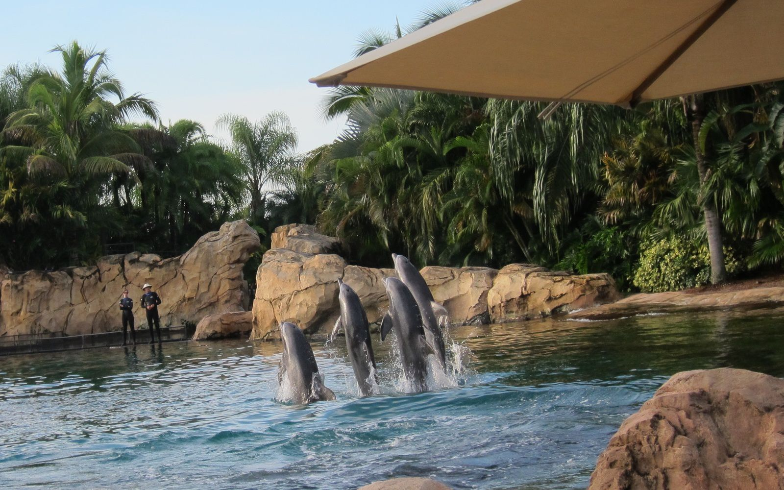 Recit d'une journee extraordinaire a Discovery Cove Orlando - FL (1)