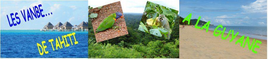 Les vanbe... de  Tahiti à la Guyane