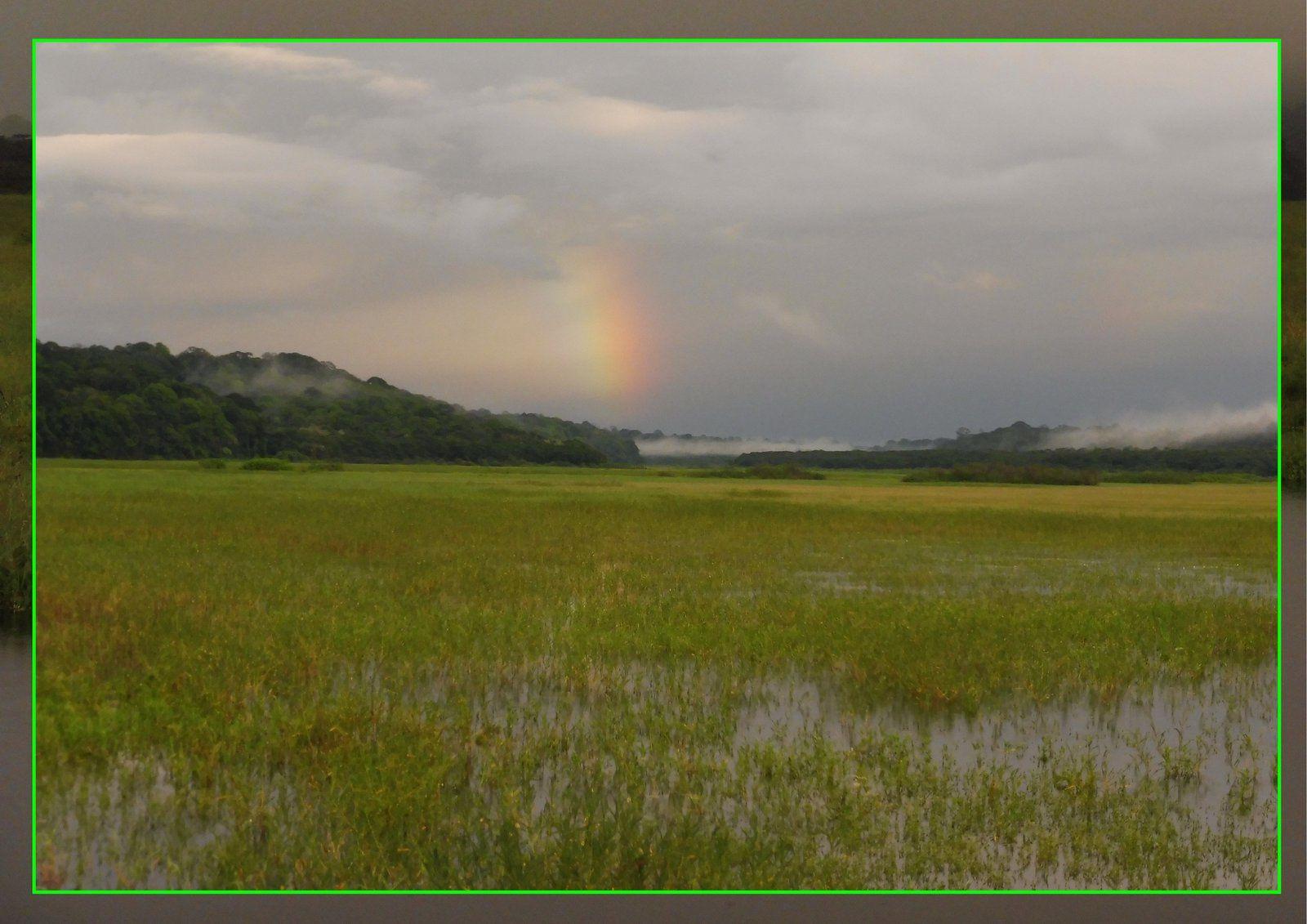 Les marais de Kaw sur l'Ecolodge.