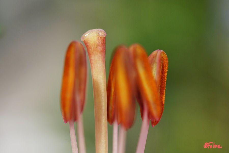 Quelques images de jardins