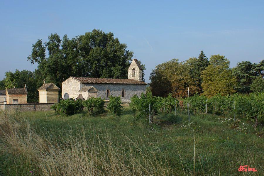 Au coeur du vignoble de Gaillac