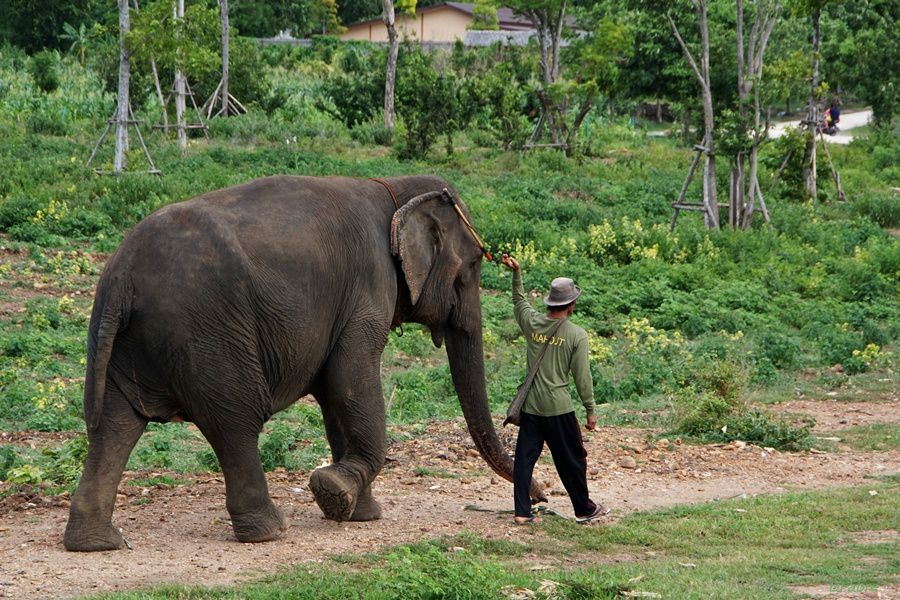 Elephant world