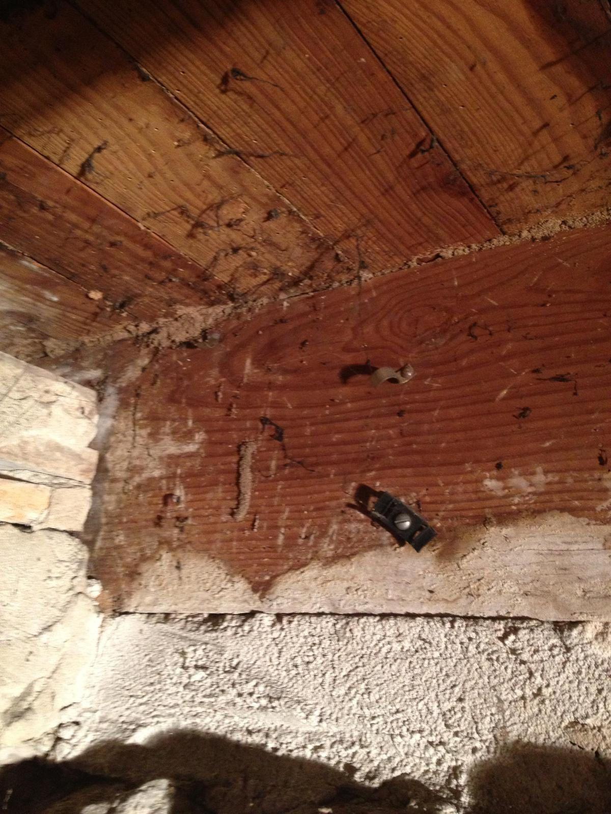 Traitement des termites curatifs ou préventifs Lot-et-garonne sur les secteurs d'Agen, Marmande,Nérac, Tonneins, Castelejaloux. Tél: 05.53.83.42.91