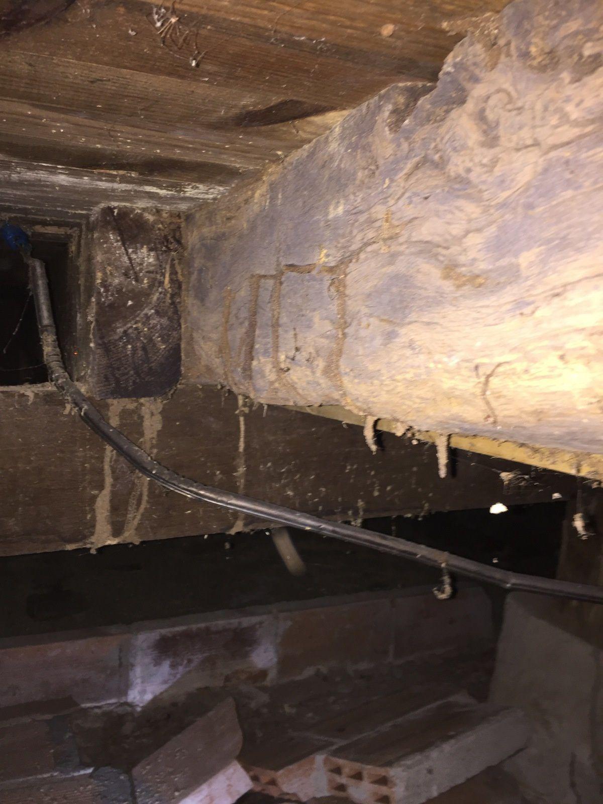 Traitement des termites à Bordeaux