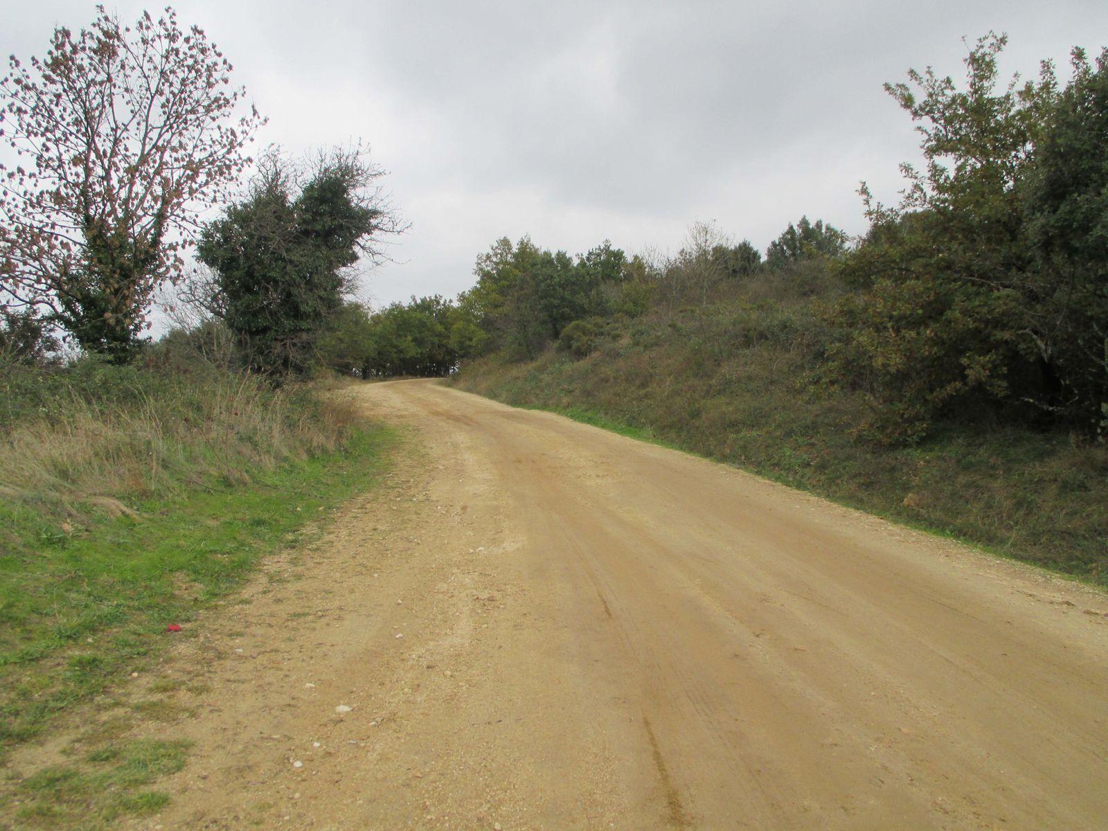 Un peut de piste et retour dans les bois ou la semaine dernière nous avions trouvé des champi.... :)