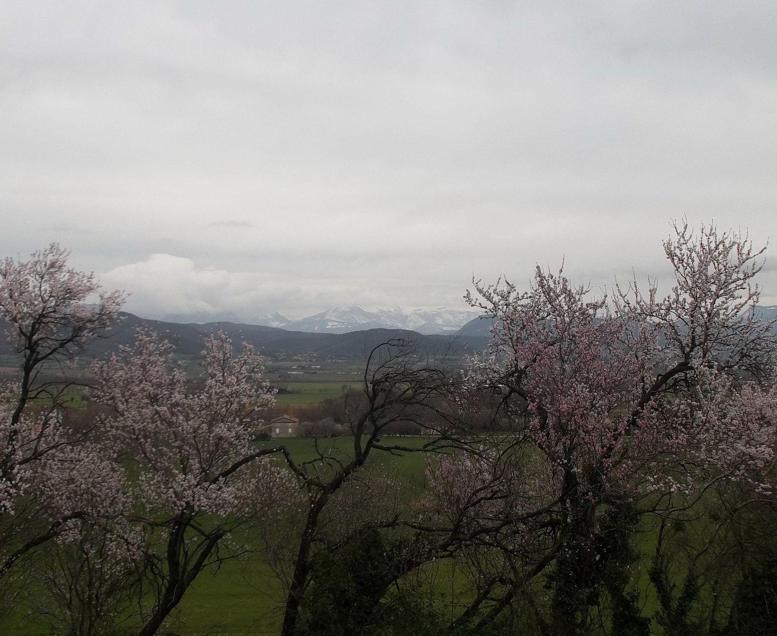 Arbres en fleurs, la neige, un ciel très couvert mais ou est passé le soleil?