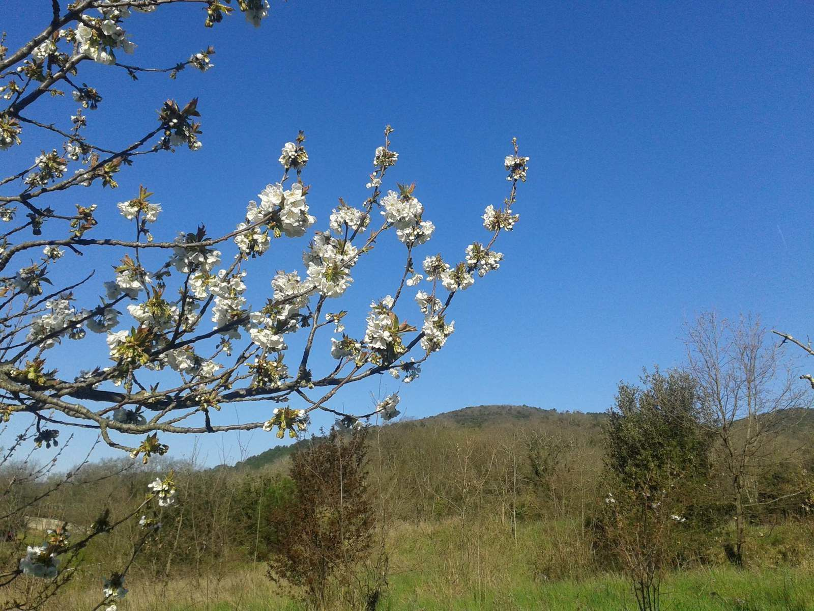 Malgré le vent et le froid c'est une belle journée qui s'annonce. Et les cerisiers sont en fleurs!