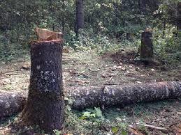 La déforestation sauvage progresse de plus en plus, multipliant les exportations de l'avocat par 30 depuis 2003