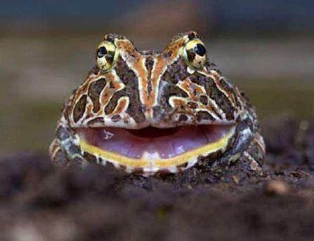 EQUATEUR - chantage écologique à la non-exploitation du pétrole contre 3,6 milliard de dollards ! Refus de l'OPEP ... + Collector des animaux d'Equateur en image !