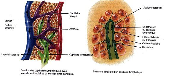 Cancer :  Le lymphome non hodgkinien