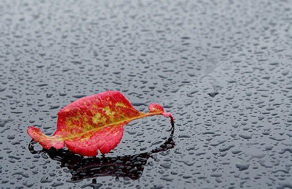 D'ondées de pluie pure... Par JoCanciar