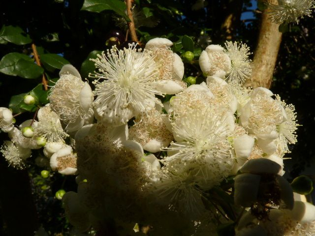 la fleur de plus près ....très très parfumée