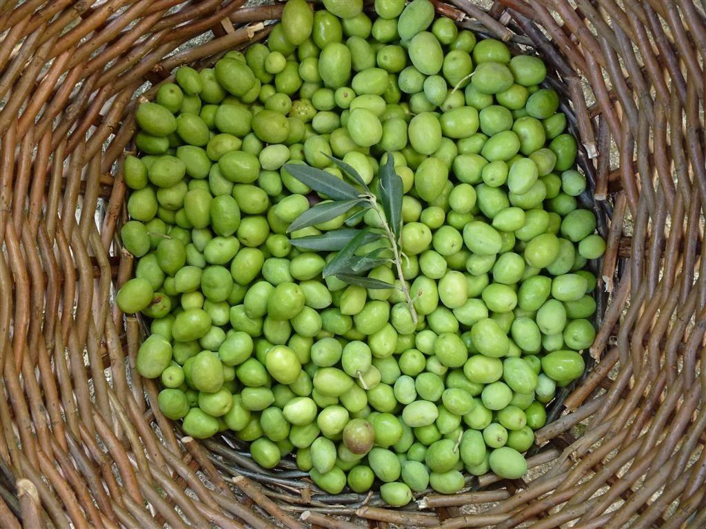 Les olives cassées (oulivo escachado) Pas à Pas...