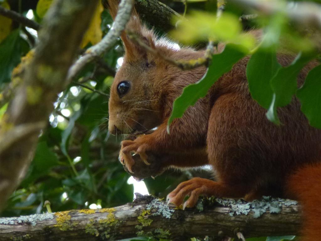 Un Petit écureuil Pas Craintif Pour Deux Sous Dans La