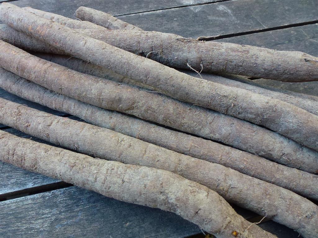 Les racines de scorsonère telles qu'on les trouve au marché