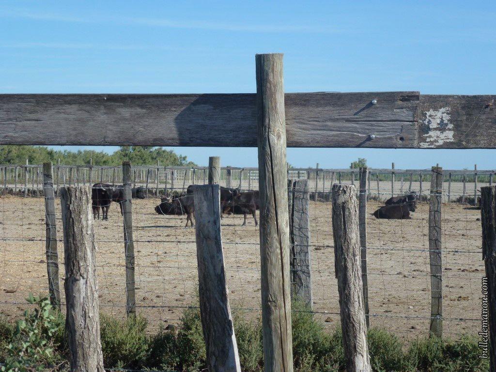 Un parc à taureaux.