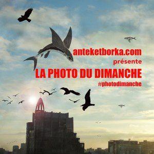 Un vieil amandier pour #photodimanche