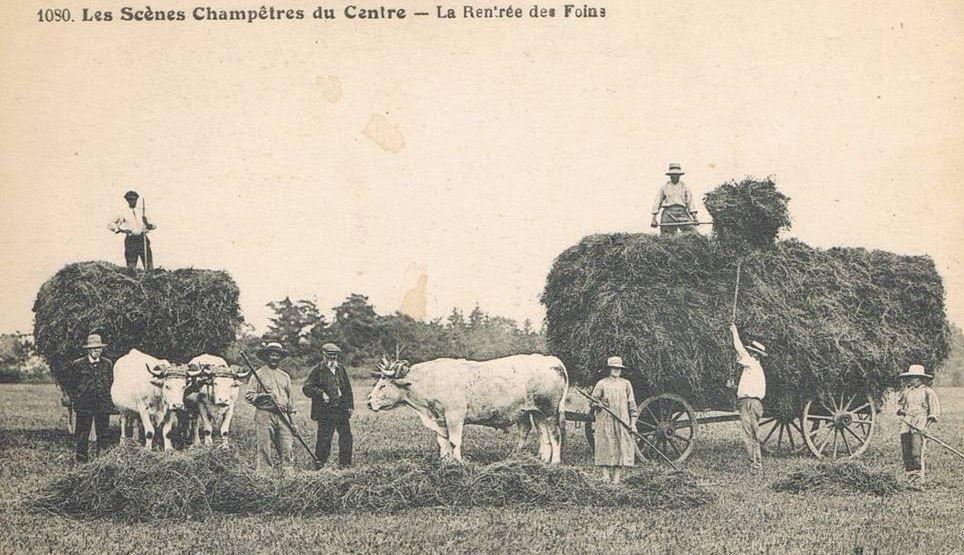 La fenaison dans le Centre de la France