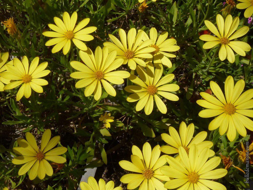Noms De Fleurs Jaunes