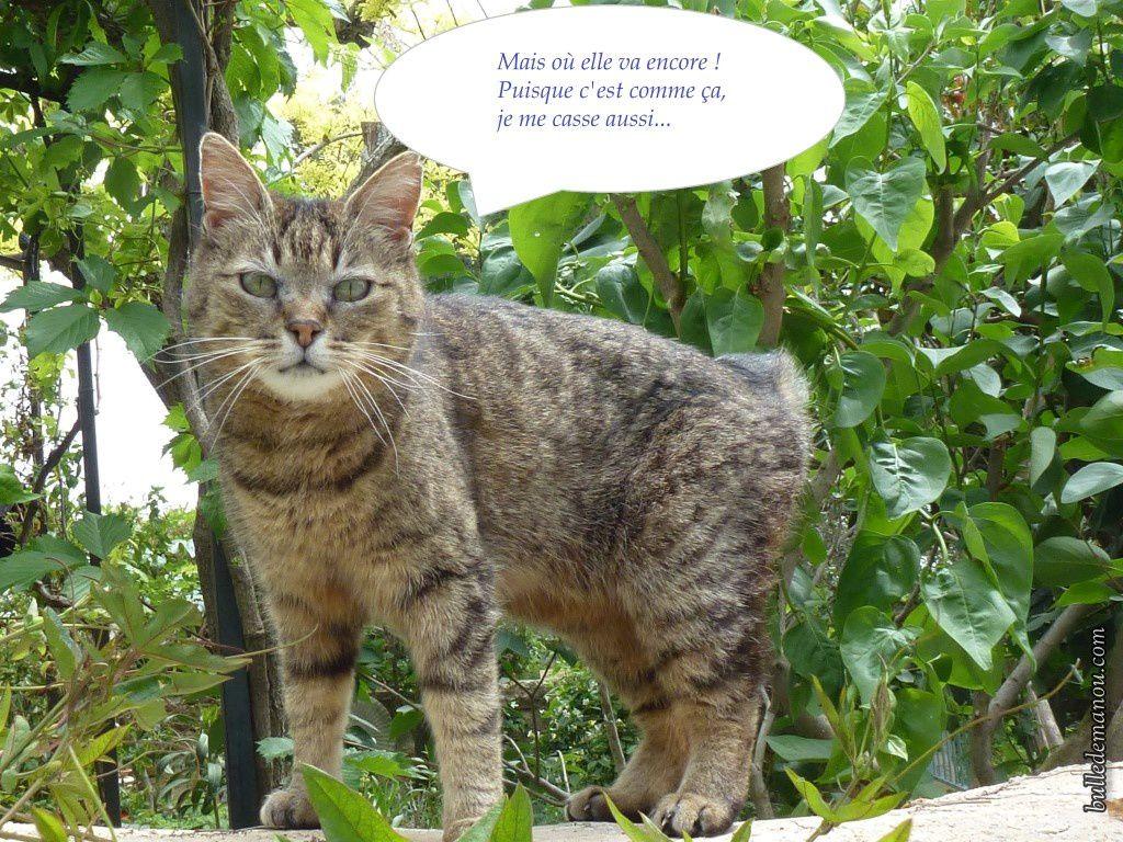 Ma chatte Iris qui a 19 ans, s'en va quand je ne suis pas là !