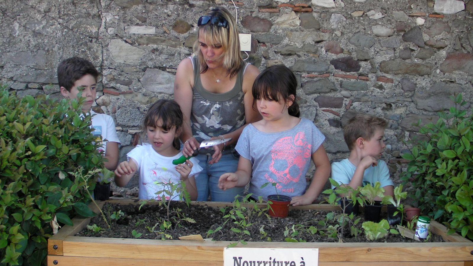 La jardinière de l'école. Premières plantations, premiers semis