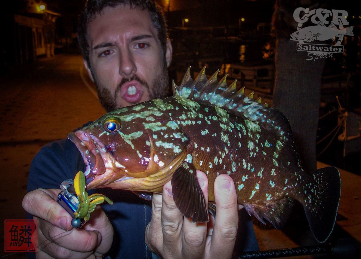Rockfishing mérou