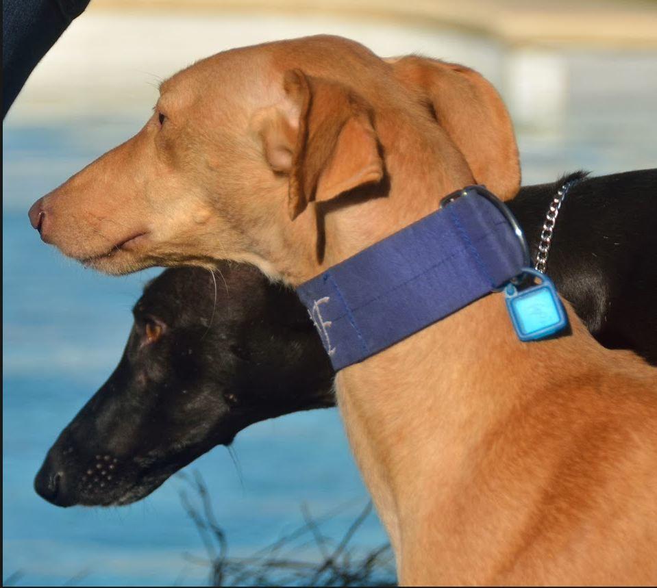 Séance photo du 4/01 : Nos stars à l'adoption et les autres !!