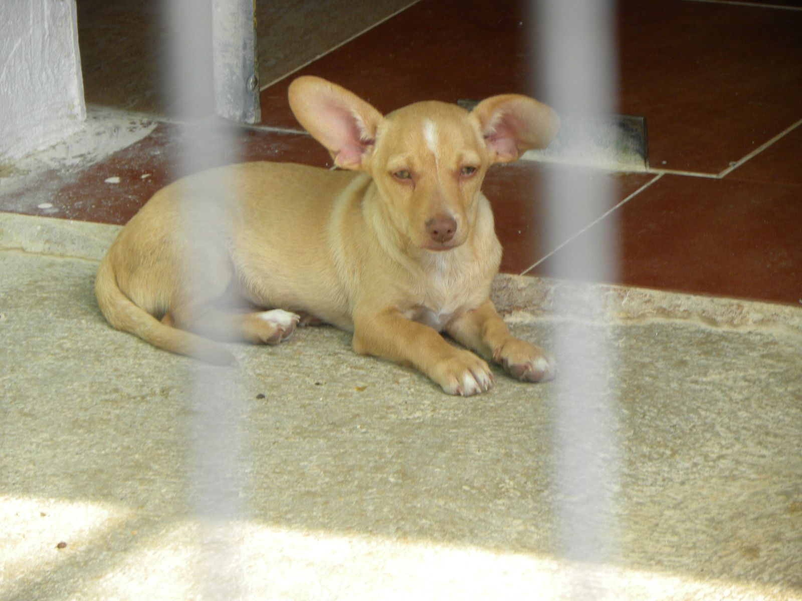 &quot&#x3B;Les Cachorros&quot&#x3B; ils naissent et grandissent en refuge....