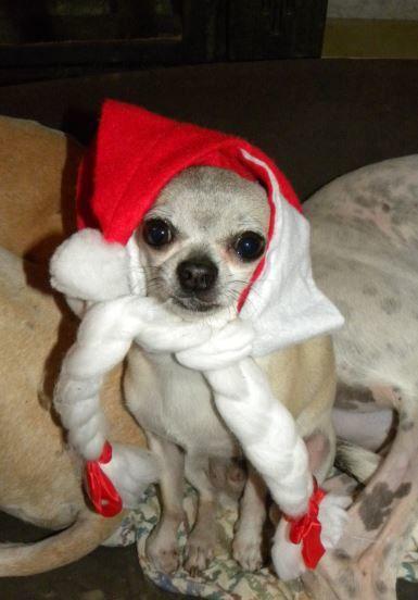 Joyeux Noël /Feliz navidad