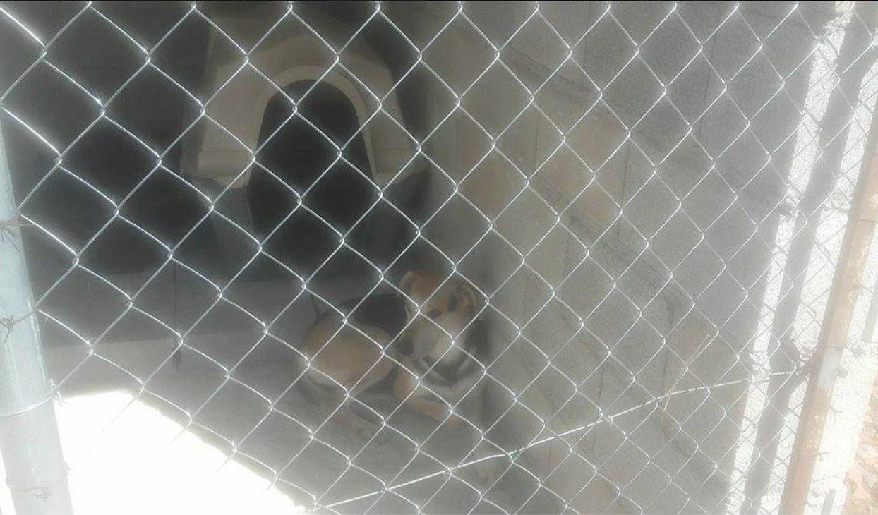 Refuge FUERZA ANIMAL/dernier appel aux dons pour finir les travaux