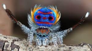 vidéo : quelle belle araignée !