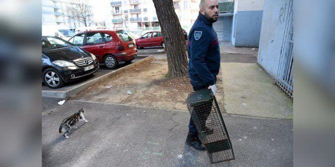 Campagne de stérilisation à Montpellier : les chats de rue entre de bonnes mains