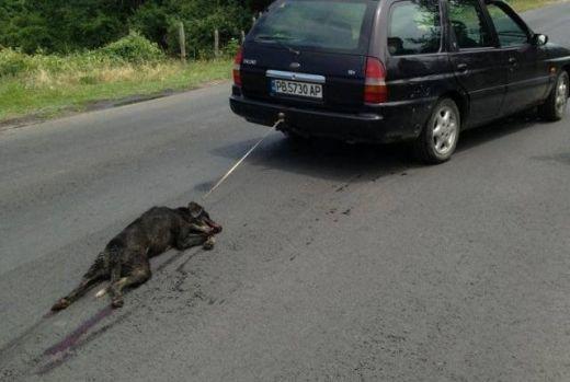 Un chien meurt attach et tran derrire une voiture