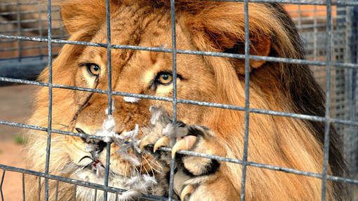 LE COSTA RICA FERME SES ZOOS : LES ANIMAUX RELACHES