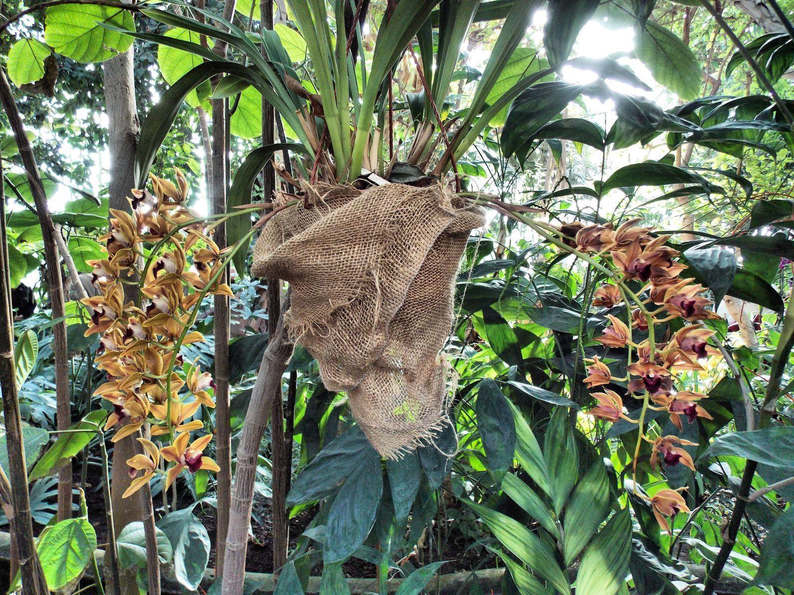 Orchidées - Jardin des plantes