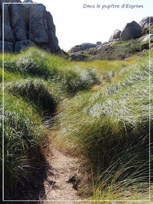 Corsica Bella (8) Les îles Lavezzi
