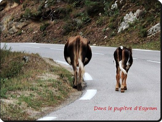 Corsica Bella (13) Cucuruzzu et Capula
