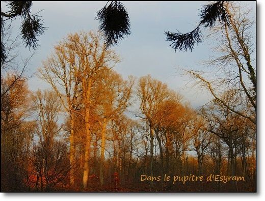 Une belle journée d'hiver : Paysages
