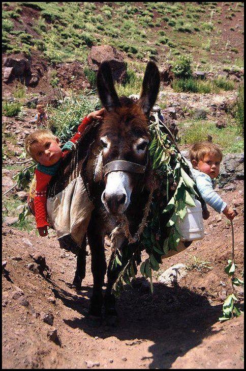 Mon âne, mon âne ...
