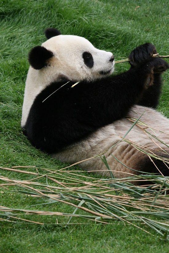 On va voir les pandas : suite et fin !