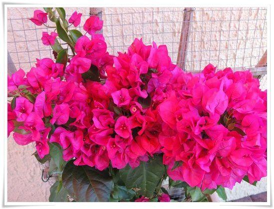 L'été passe, comme les fleurs !