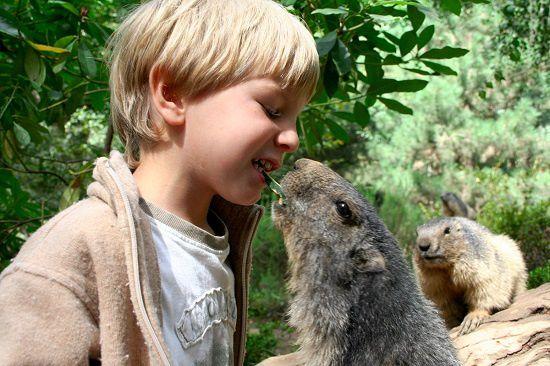 Les marmottes !